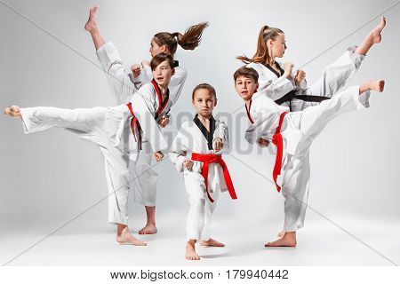 The studio shot of group of kids training karate martial arts on gray backlground
