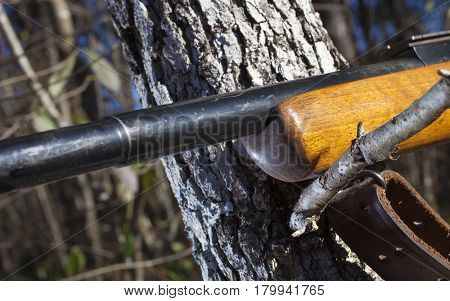 Old wood stocked rifle using a tree branch for a rest during a shot