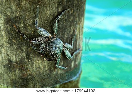 Alive Crab On Tree Over Ocean Water
