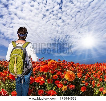 Woman with backpack admiring the floral field. Concept of rural and recreational tourism. The bright southern sun illuminates the fields of red garden buttercups