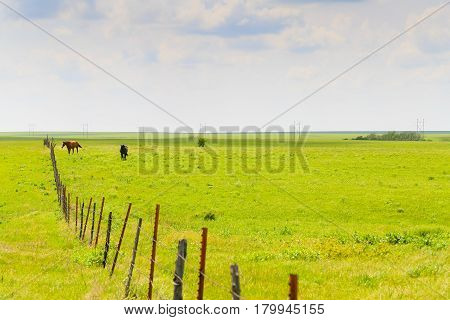 Horses In The Flint Hills