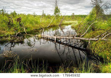 A scenic beautiful wetland. Yaroslavl region, Russia.