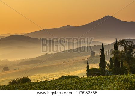 Cypress In Tuscan Countryside, Italy