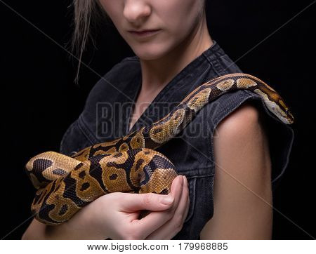Woman holding royal python on black background
