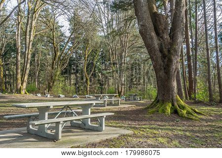 A view of picnic tables and trees at Dash Point State Park in Dash Point Washington.
