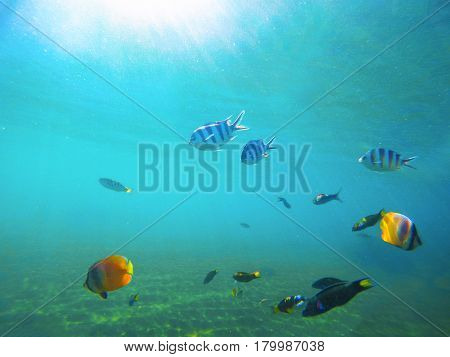 Underwater landscape with tropical fish. Sea water near exotic island with marine inhabitants. Oceanic animal species. Snorkeling in tropical seashore. Butterfly fish and dascillus in wild nature