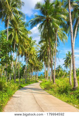 Tropical island traveling landscape. Empty road and palm trees. Perfect weather on exotic island. Sunny day tour in Philippines. Tropical nature with coco palm trees on roadside. Empty path in tropics