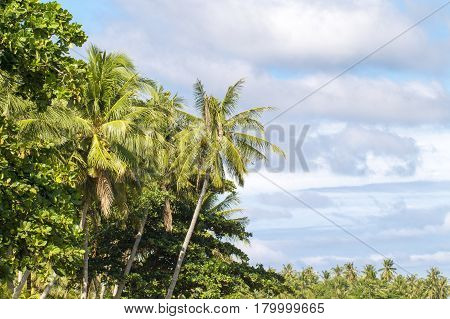 Tropical landscape with palm tree and cloudy sky. Outdoor travel in exotic place. Greenery of tropical island. Exotic plants of rain forest photo background. Sunny scene of tropic jungles by seaside poster