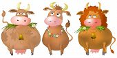 Three thick kind cows eat a green grass, isolated vector poster