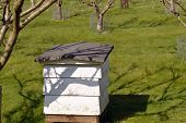 Beehive used for the purpose of production of honey and pollination of nearby fruit trees poster