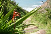 Nature ( Pathway To The Beach ) High Quality poster