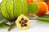 Cape gooseberry fruit, flower and calyx (Physalis peruviana) on white background poster
