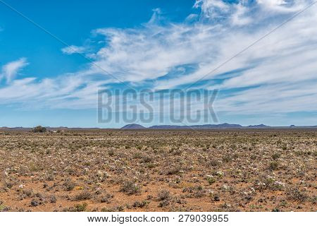 A Field Of White Wildflowers Near Williston In The Northern Cape Province Of South Africa