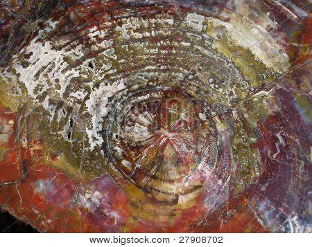 Petrified Wood Rings
