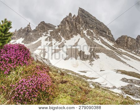 The First Spring  Beautiful Flowering Sextener Dolomiten, Mountains View Italian Alps