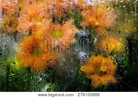 A Bouquet Of Orange Chrysanthemums Behind The Steamy Show-window At Night Time