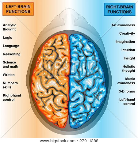 Illustration body part,human brain left and right functions poster