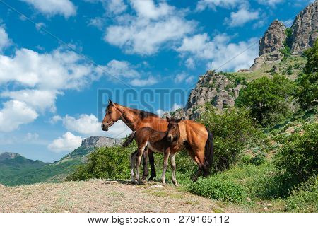 Mother And Kid Horses Standing In Valley Of Ghosts Of Crimean Mountains At Spring Season