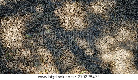 Needles Of A Conifer And Shadow Play On The Soil