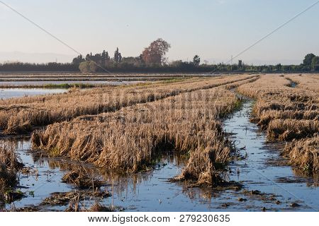 Rice Fields At Sunrise In The Natural Park Of Albufera, Valencia, Spain