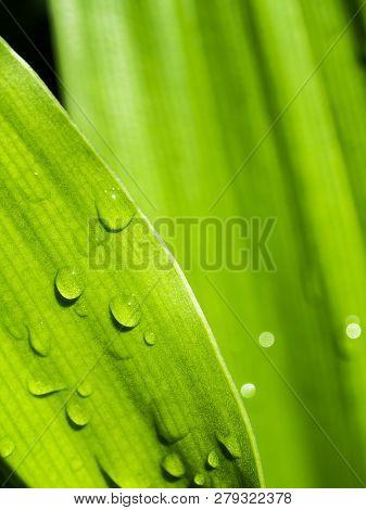 Full Frame Freshness Leaves Of Ornamental Plant As Nature Background