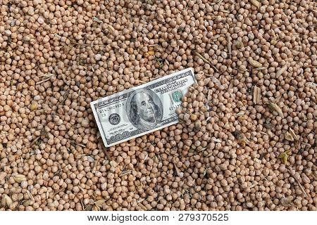 Dry Chickpeas Harvest And 100 Usd.the Increase In Prices Of 100 Usa And Dry Chickpeas,