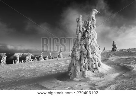 Background, Beautiful, Beauty, Cloud, Cold, Color, Country, Dark, Environment, Evening, Forest, Froz