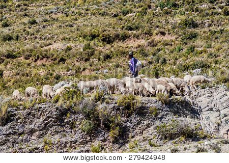 Isla Del Sol, Bolivia - May 12, 2015: Herdsman With A Herd Of Sheep At Isla Del Sol Island Of The Su