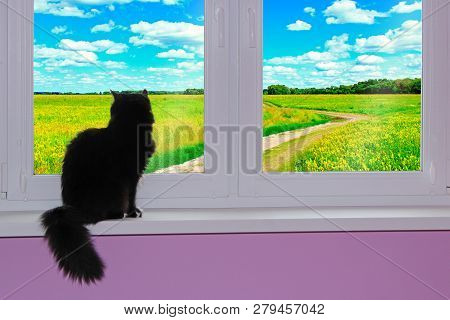 Black Cat Looking At Window With View To Rural Road. Rural Summer Landscape