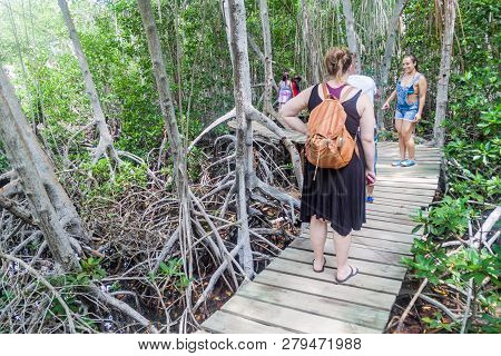San Bernardo, Colombia - August 31, 2015: Tourists Walk Through Mangrove Forest On Palma Island Of S