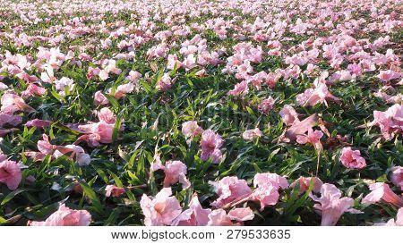 Pink Flowers Fallen On Green Grass Floor In Spring Season.