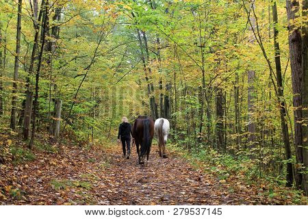 Two Horses In The Colorful Autumn Forest