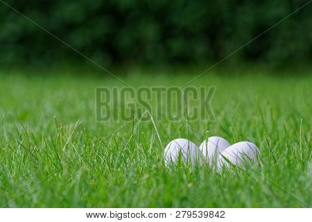 Three White Easter Eggs In Grass Of A Green Lawn Against Dark Green Hedge