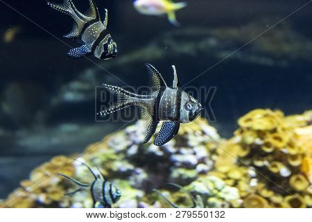 Cherbourg, France - August 26, 2018: Aquarium Inhabitants In The Maritime Museum La Cite De La Mer O