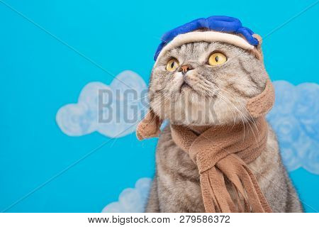 Cat Aviator Pilot, Scottish Whiskas In Mask And Goggles Pilot Aircraft. Concept Of The Pilot, Super
