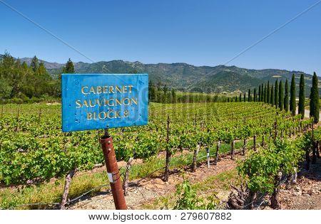 Cabernet Sauvignon wine grape variety sign. Vineyards landscape in California, USA