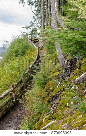 Muddy Uphill Hike On The Rainbird Trail In Ketchikan Alaska On A Rainy Autumn Morning
