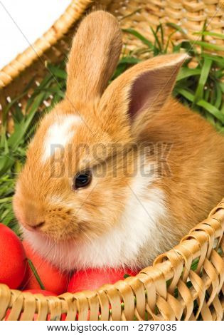 Easter Bunny In Eggs Basket