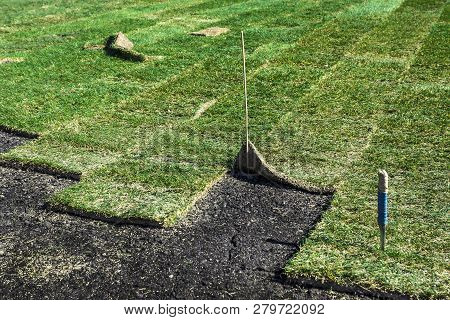 Laying Sod .laying Lawns In The Park