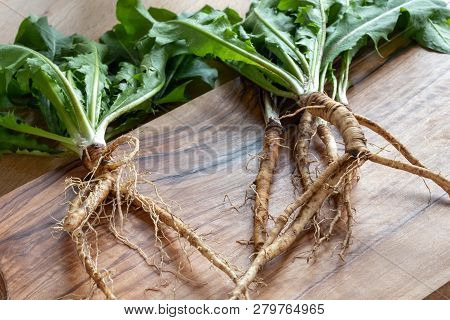 Dandelion Roots With Leaves On A Table