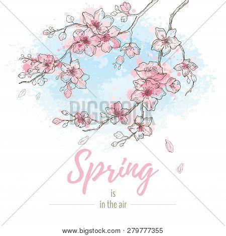 Watercolor Spring Sakura Flowers Blossom On Sky Blue Background, Hand Drawn Art Set. Cute Oriental P