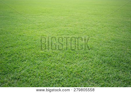 Green Grass Soccer Field Background Beautiful Pattern Of Fresh Green Grass For Football Sport, Footb