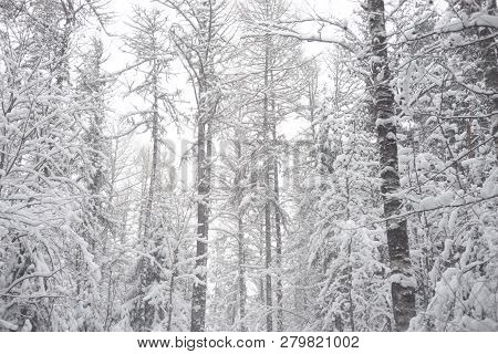 Deciduous Forest At Winter In Karelian Isthmus, Russia.