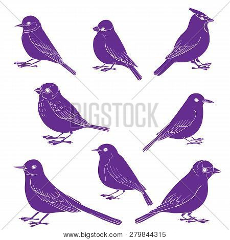 Vector Set Of Birds Silhouettes, Hand Drawn Songbirds, Isolated Vector Elements