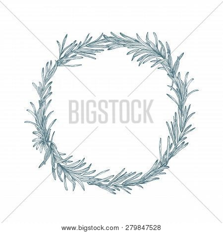 Circular Decoration Or Wreath Made Of Rosemary Hand Drawn With Contour Lines On White Background. De