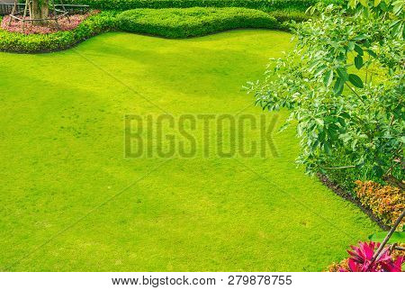 Green Lawn, The Front Lawn For Background