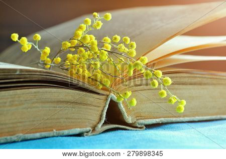 Spring background. Open old book with yellow spring mimosa flowers. Spring still life in sunny warm tones. Selective focus at the book's spine - shallow DOF. Spring composition