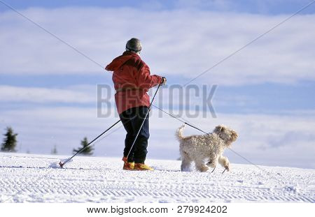 Gala, Norway- February 07,2017: Norway A Single Langlaufer Tracking Through The Snowfields With Her