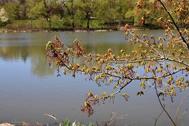 The Branch Of The Tree On Water Bakground