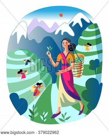 Happy Smiling Asian Girl Carrying Wicker Basket With Green Tea Leaves. Woman In Traditional Chinese